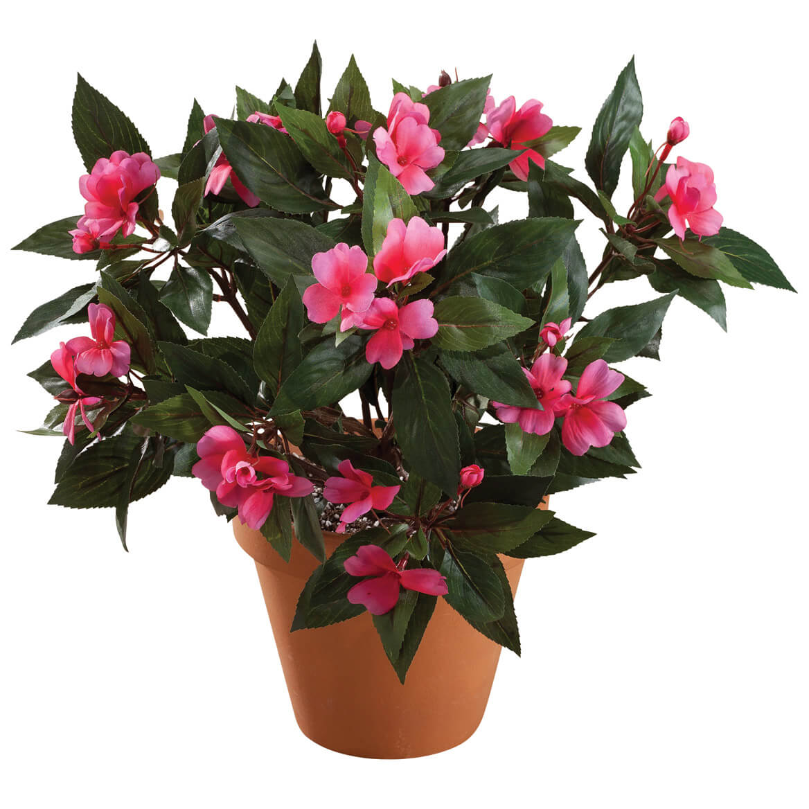 Impatiens Busy by OakRidge™